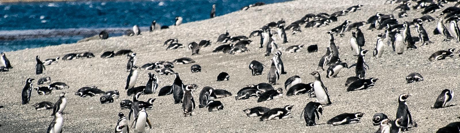 pinguinos-2
