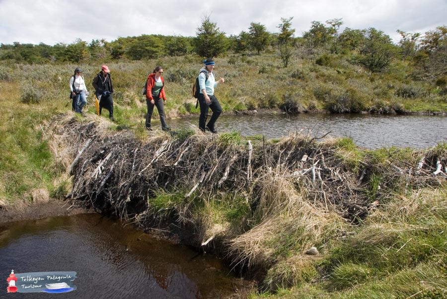 Experiencia-Encuentro-con-Castores-y-Laguna-Esmeralda- Tolkeyen Patagonia Turismo