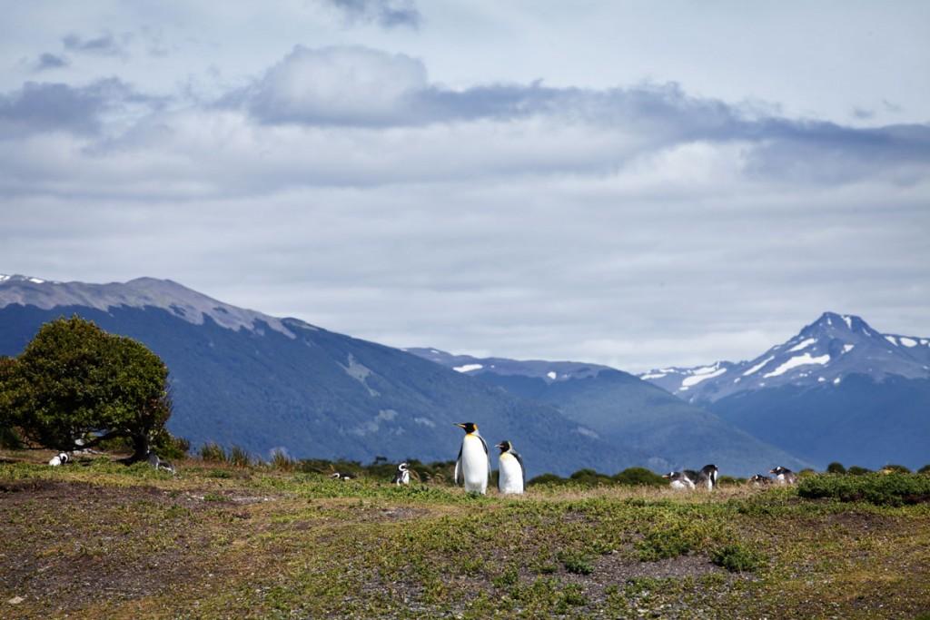 pinguino ushuaia Tolkeyen Patagonia Turismo