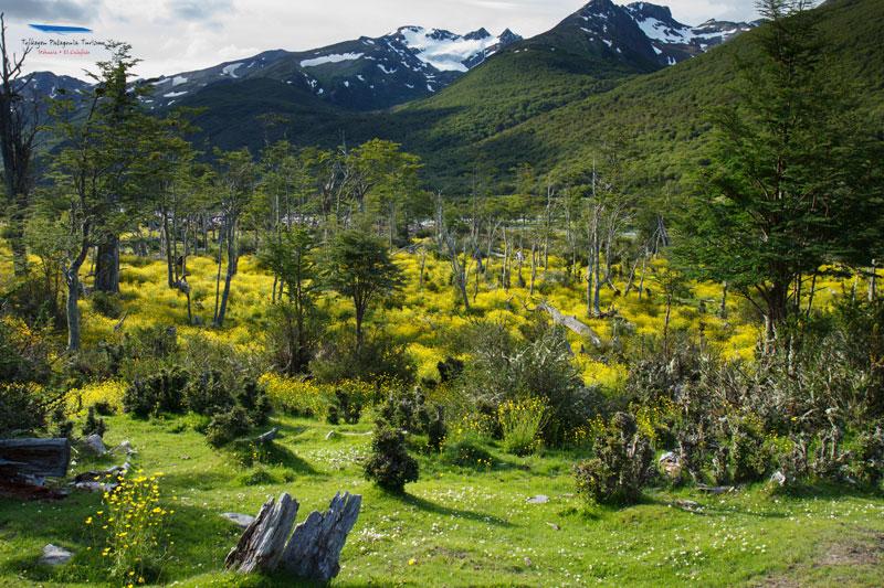 Paisajes del Parque Nacional TIerra del Fuego